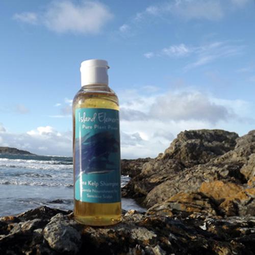 Sea Kelp Bottle on Shore